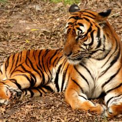 Isn't It Cute When Animals Escape Zoos?