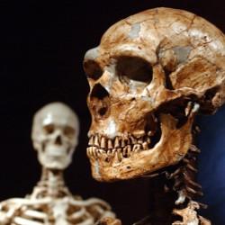Homo Sapiens Neanderthal