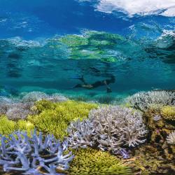 Reef Death